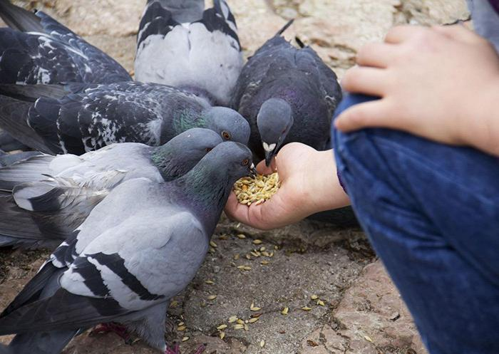 prevention of pigeon disease