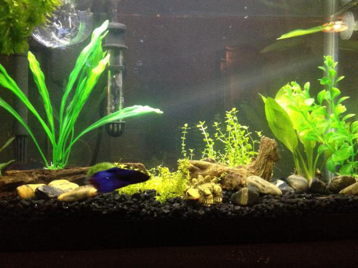 which filter is best for an aquarium of 100 liters