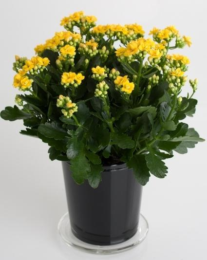 how to properly care for indoor flowers