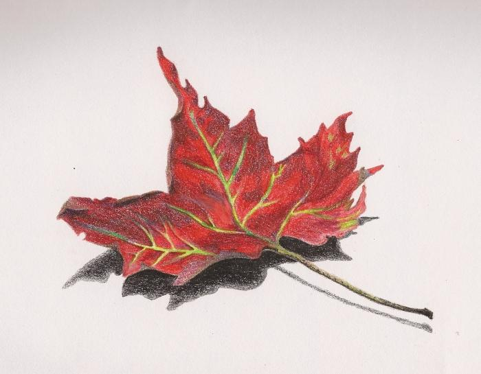 How to draw a maple leaf